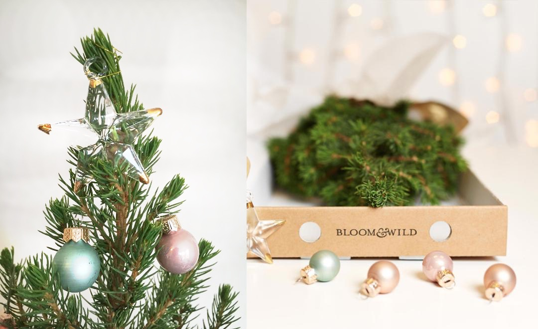 Christmas Tree in a box from Bloom & Wild